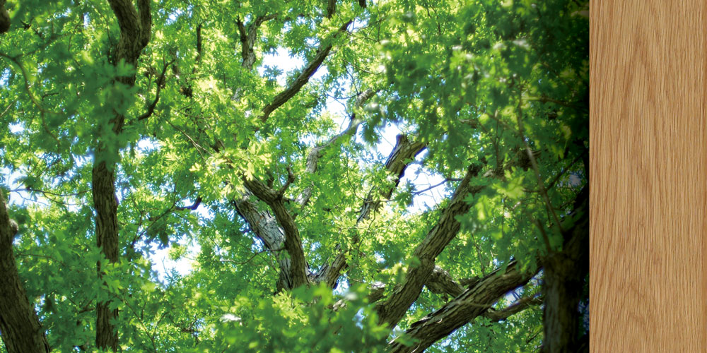 白橡木 White Oak