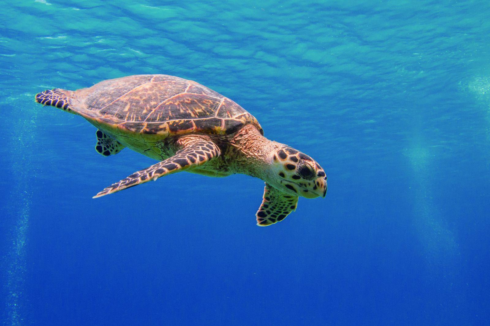 海龜利用生物羅盤的洄游現象