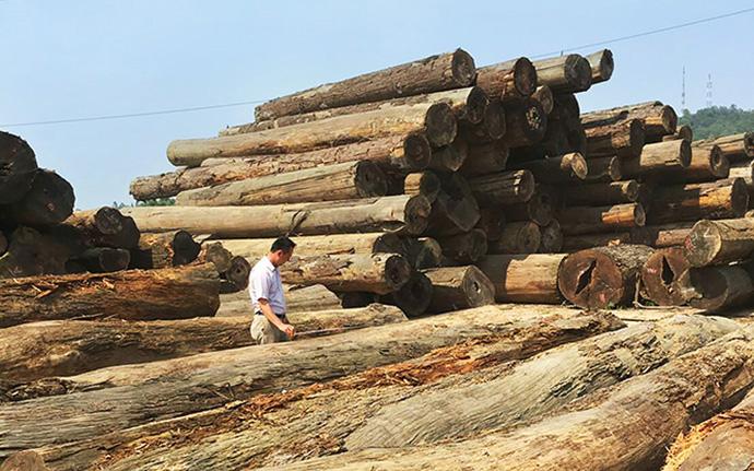 林場精挑細揀最優良的上等原木