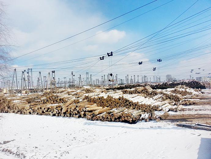 吊纜方式將山上的原木運輸至林場
