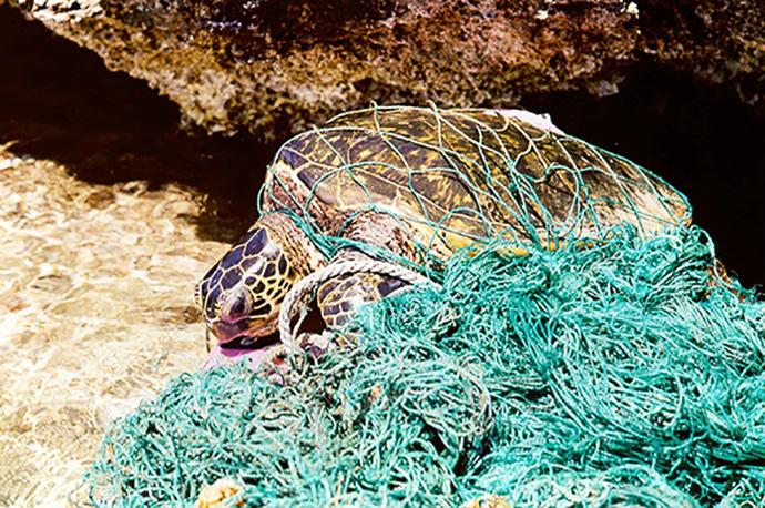 藍綠色的漁網是海洋常見的生態殺手之一